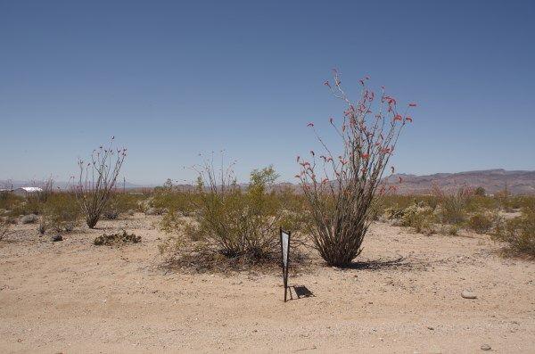 UNK Calva Road, Yucca, Az. 86438